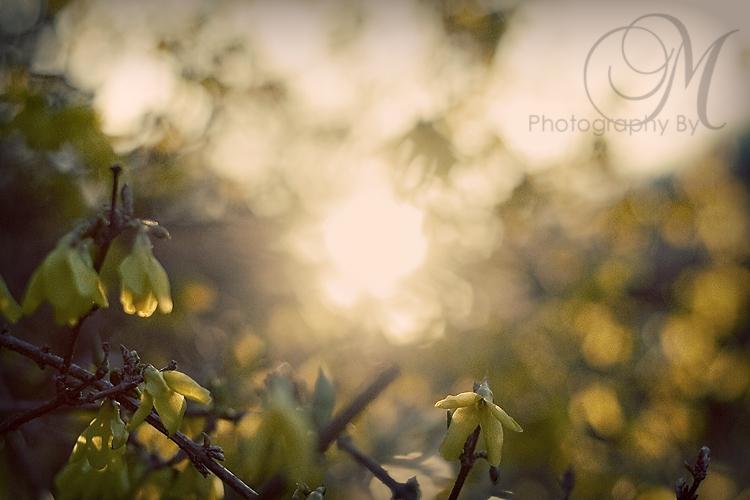 sunset-spring2