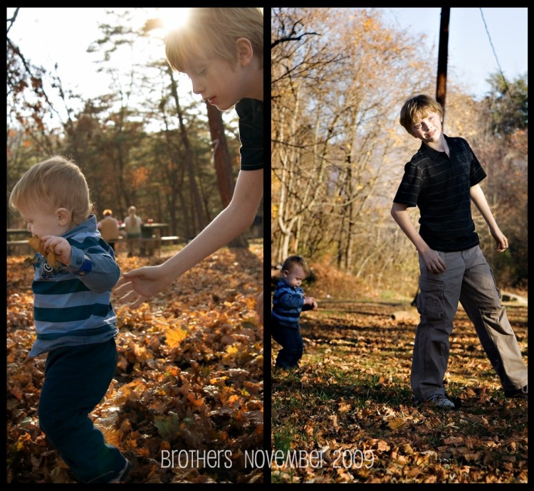leaves blog  2