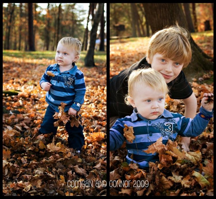leaves blog 3