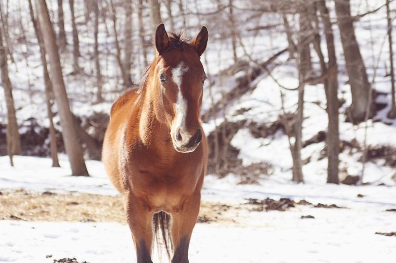 horse 1 sr