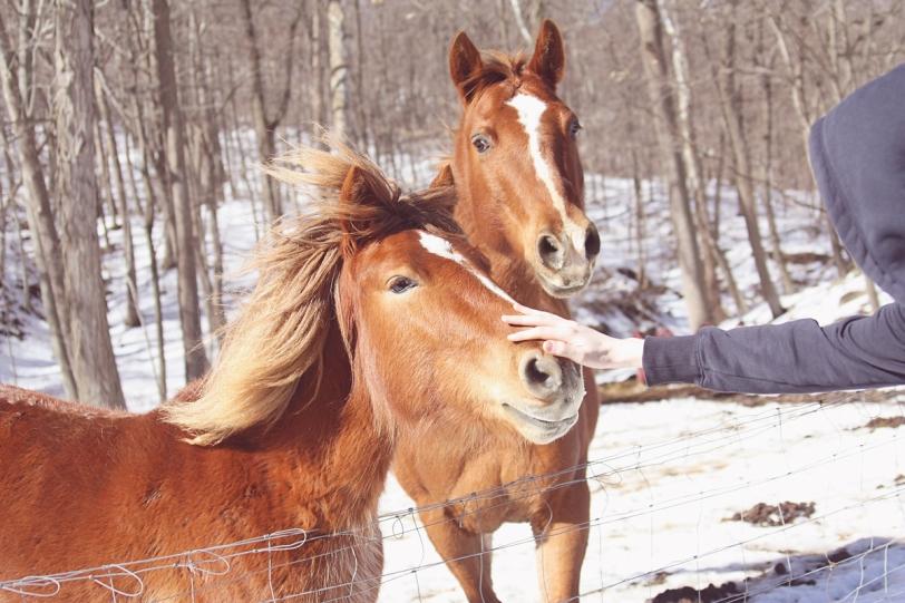horse 2 sr