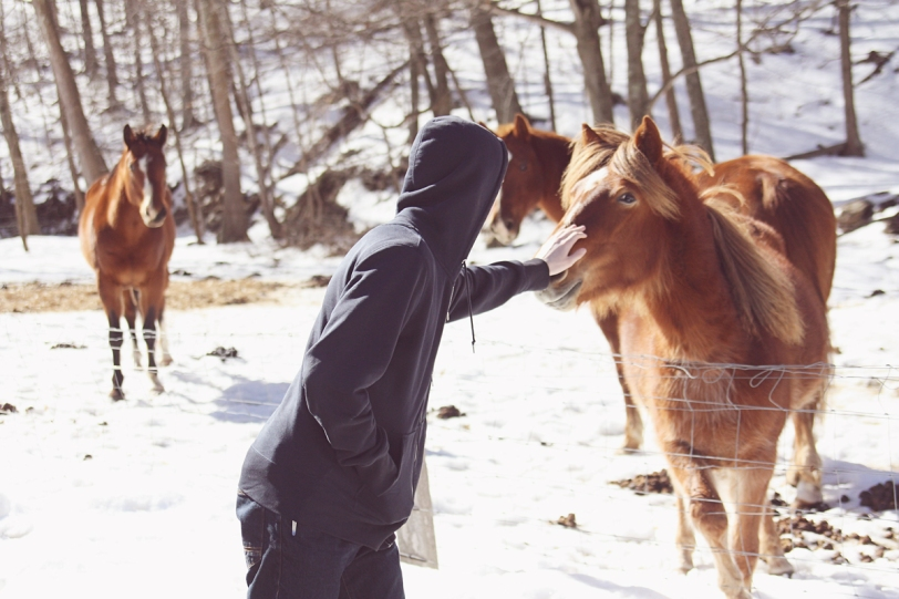 horse 3 sr