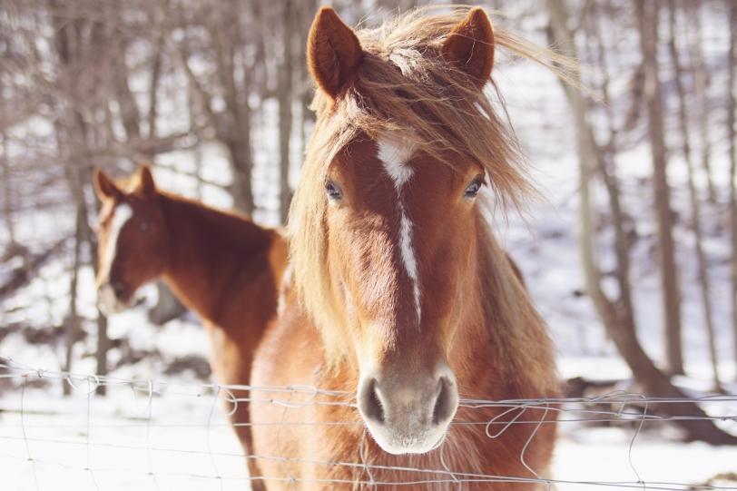 horse 4 sr